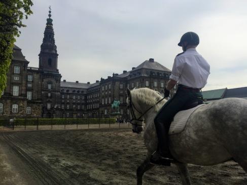 copenhagen horse training hdw forbetterorwurst